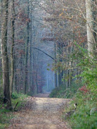 Pathway-Woods_2003
